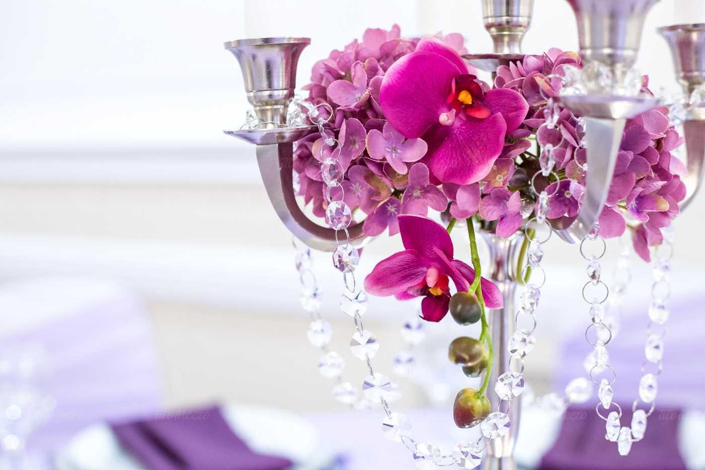 Каланхоэ цветы фото название и уход за ними